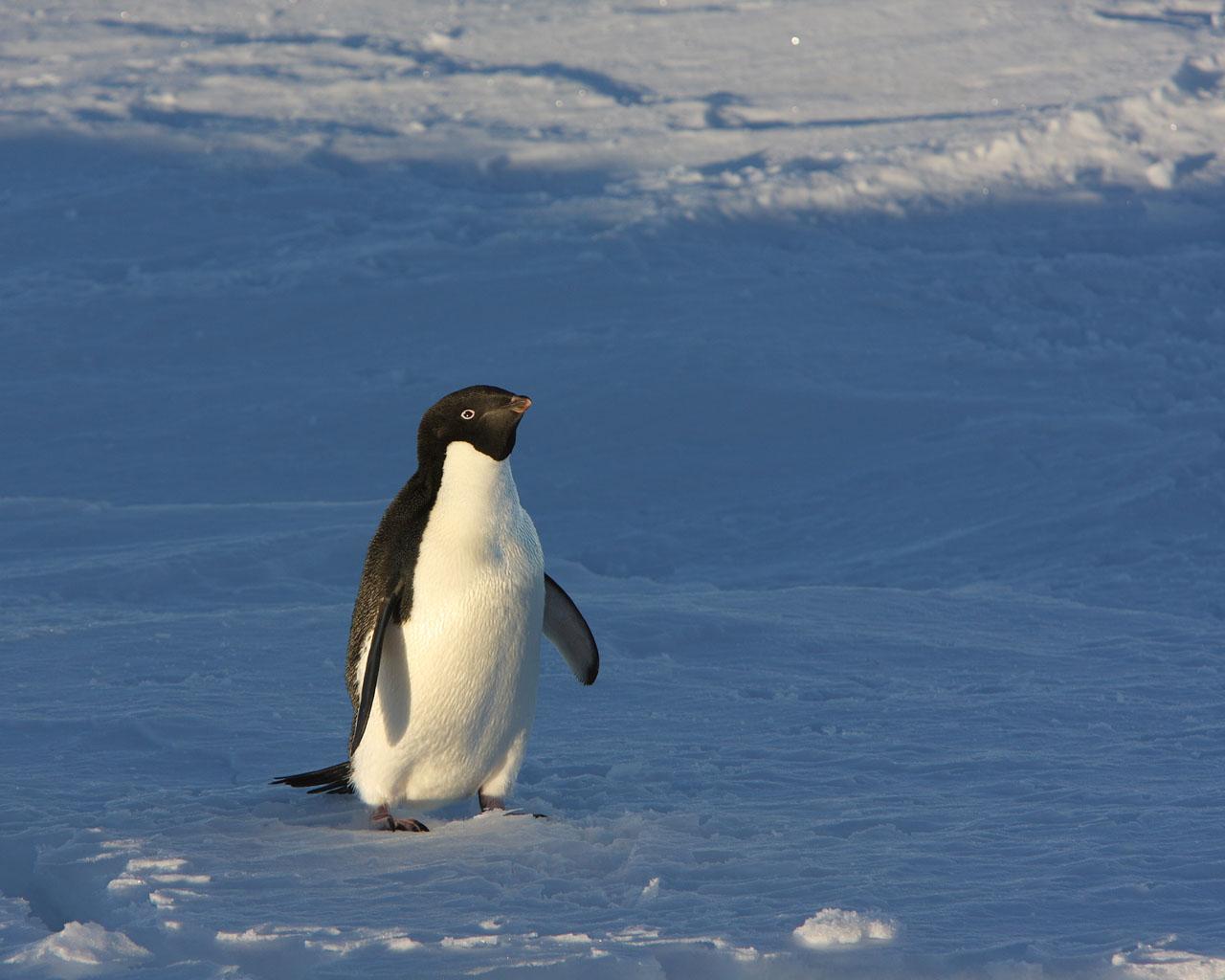 ペンギンの画像 p1_34